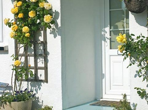 Roses around the door